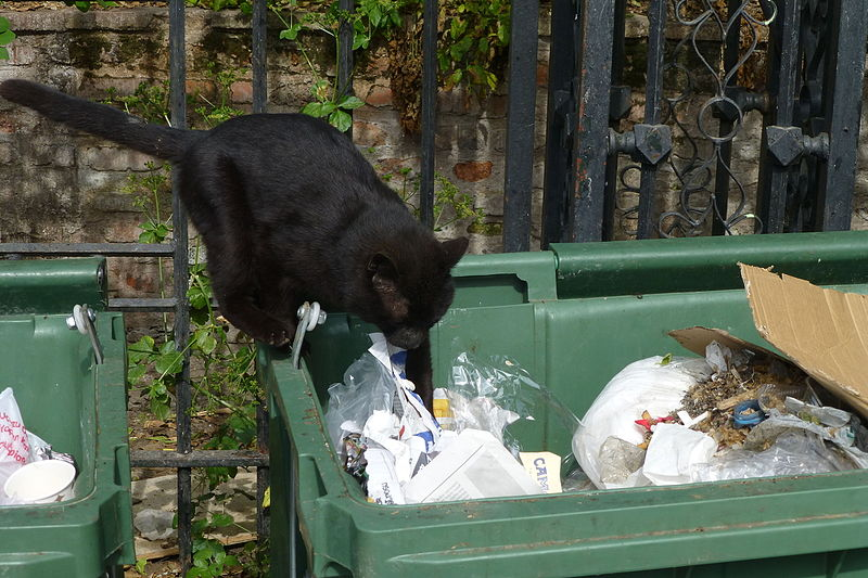 File:A black cat searching for food - 0997.jpg