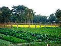 A collage of vegetables spices puthimari growing in Kokrajhar.jpg