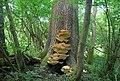 A very fine fungus - geograph.org.uk - 2097811.jpg