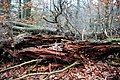 A very objective example of browrot caused by several mushrooms at Imbos forest - panoramio.jpg