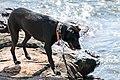 Acadia 2012 08 23 0300 (7958577252).jpg