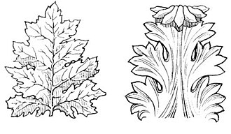 https://upload.wikimedia.org/wikipedia/commons/thumb/2/2e/Acanthus_%28PSF%29.jpg/330px-Acanthus_%28PSF%29.jpg
