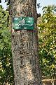 Acharya Jagadish Chandra Bose Indian Botanic Garden - Howrah 2011-01-08 9869.JPG