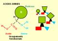 Acides aminés.PNG