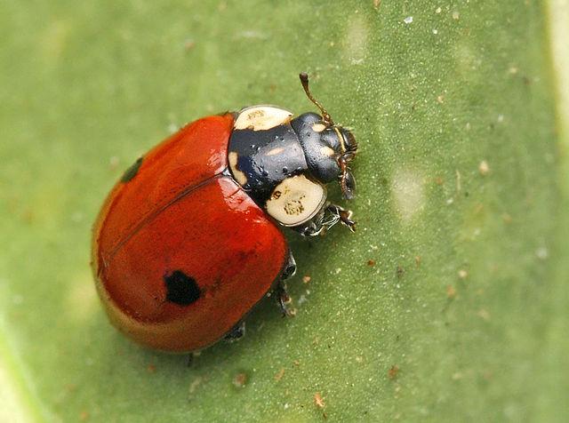 Les entozoaires définir la présence selon le sang