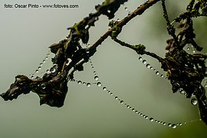 Lomas - Moisture from the coastal fog condenses into water droplets that permit plants to flourish without rainfall.