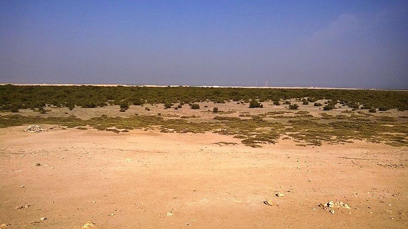 File:Al khore Mangrove forest (Purpule Island) - panoramio (35).jpg