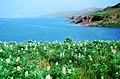 Alborz - Taleqan Lake - panoramio (1).jpg