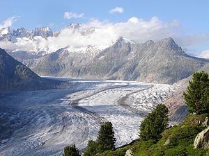 Aletsch Glacier - Image: Aletschgletscher mit Pinus cembra 2