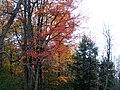 Allan's Mill, October, 2009 (5021223516).jpg