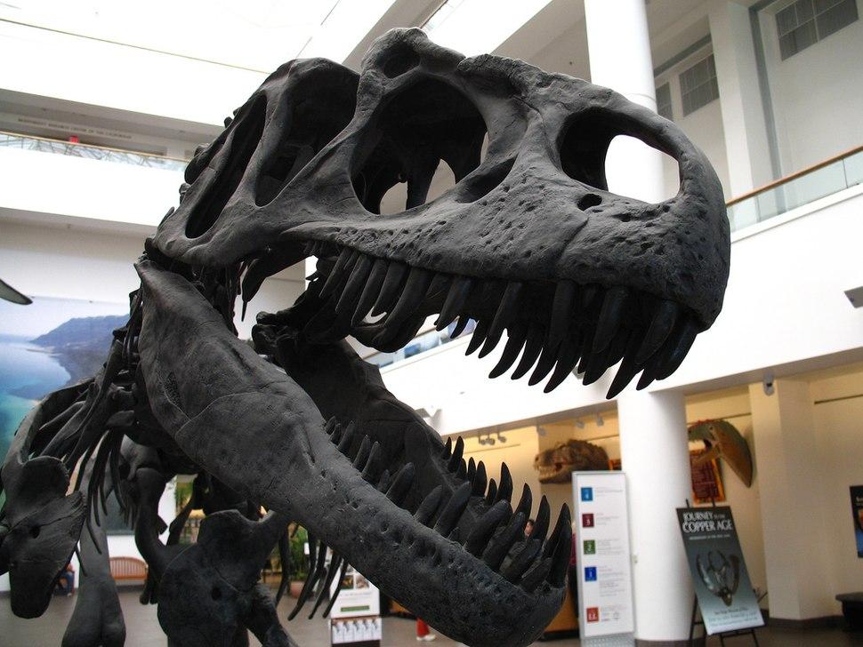 Allosaur (1768858002)