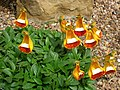 Alpine Plants, Kew Gardens - geograph.org.uk - 504485.jpg