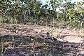 Alto Araguaia - State of Mato Grosso, Brazil - panoramio (244).jpg