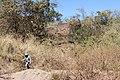 Alto Araguaia - State of Mato Grosso, Brazil - panoramio (346).jpg