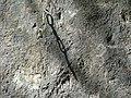 An der Kletterwand - panoramio.jpg
