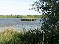 An island of reeds - geograph.org.uk - 1335076.jpg