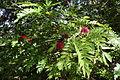 Andromeda Botanical Gardens 01.jpg