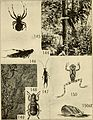 Animal communities in temperate America - as illustrated in the Chicago region; a study in animal ecology (1937) (18192770452).jpg