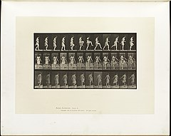 Animal locomotion. Plate 181 (Boston Public Library).jpg