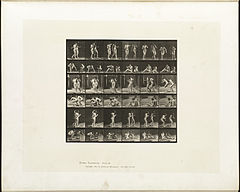 Animal locomotion. Plate 245 (Boston Public Library).jpg