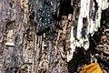 Ant (26277982815).jpg