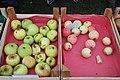 Apfel Neue Sorten.jpg