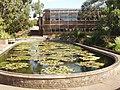 Aquatic garden, Kew Gardens - geograph.org.uk - 226846.jpg