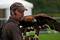 Aquila chrysaetos -Devon Game Fair, Honiton, England -falconry display-8a.jpg