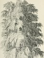 Arboretum et fruticetum britannicum; or, The trees and shrubs of Britain, native and foreign, hardy and half-hardy, pictorially and botanically delineated, and scientifically and popularly described; (14783689932).jpg