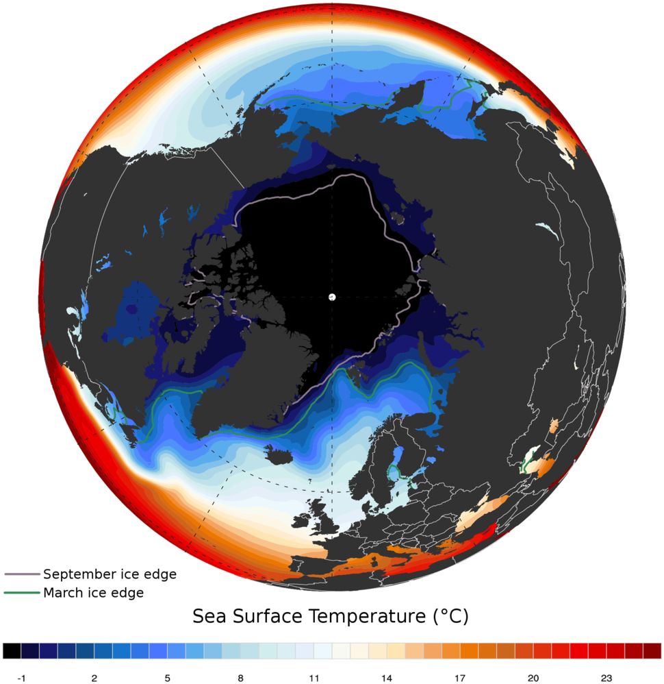 Arctic ocean SST and ice edge
