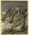 Arctic zoology (1785) (14747650491).jpg