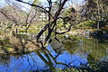 Arisugawa-no-miya Memorial Park - DSC06926.JPG