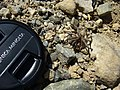 Around Azillanet spider with lens cap (997828521).jpg