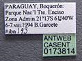 Atta saltensis casent0173814 label 1.jpg