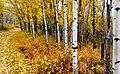 Autumn Calgary Alberta. (8168795388).jpg