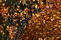 Autumn foliage 2012 (8253648970).jpg