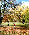 Autumn play - Molalla River SP Oregon.jpg