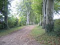 Avenue of Beeches - geograph.org.uk - 64685.jpg