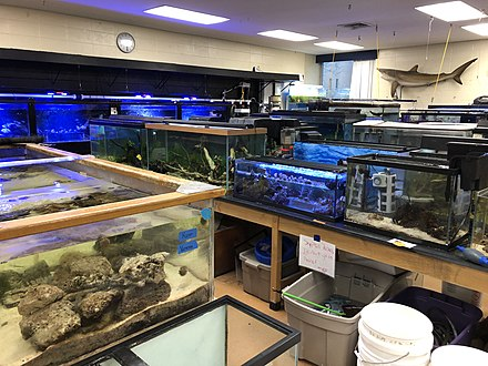 An academic aquarium at a university, using a variety of tank sizes and styles to care for different fish. BGSU Aquarium.jpg
