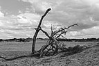Balloërveld, natuurgebied in Drenthe 35.jpg