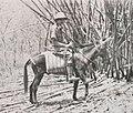 Balsan et son mulet dans les bambous du Dudessa (Ethiopie).jpg