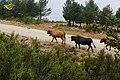 Baltar, Province of Ourense, Spain - panoramio (14).jpg