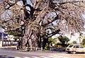 Baobab M.jpg