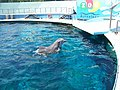 Barcelona - Dolphins at the ZOO - 2006 - panoramio.jpg