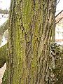 Bark rind tree plant.jpg