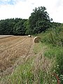 Barley field above Weston-under-Penyard - geograph.org.uk - 508907.jpg