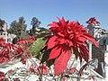 Beautiful flowerhome.jpg