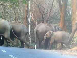Sultan Bathery - Muthanga Wildlife Sanctuary