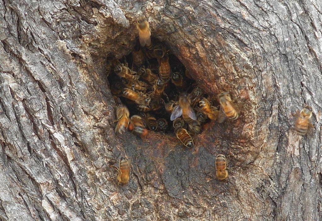 Stromy sú domovom aj hmyzu