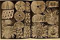 Beiträge zur Kenntnis der Meeresfauna Westafrikas (1914-15) (20337123466).jpg